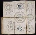 Voynich Manuscript (158).jpg