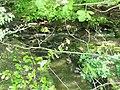 Vyžlovský rybník (008).jpg