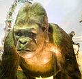 WLANL - jpa2003 - gorilla.jpg