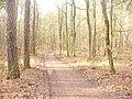 Waldweg - Frohnau (Woodland Path) - geo.hlipp.de - 32732.jpg