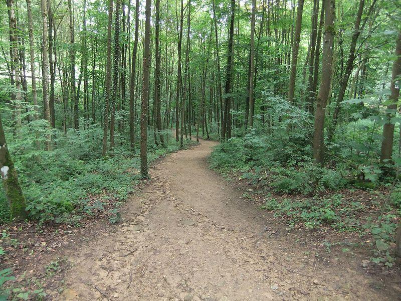 Walking path to Larochette (From Camping Birkelt)