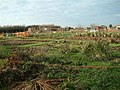 Wanborough Allotments - geograph.org.uk - 95019.jpg