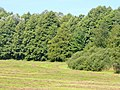 Wandlitz - Wald und Wiese (Wood and Meadow) - geo.hlipp.de - 41820.jpg