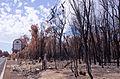 Waroona fire 2016 gnangarra 230116-114.JPG