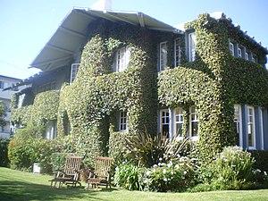 Ficus pumila - Growing on the Warren Wilson Beach House, in Venice, California