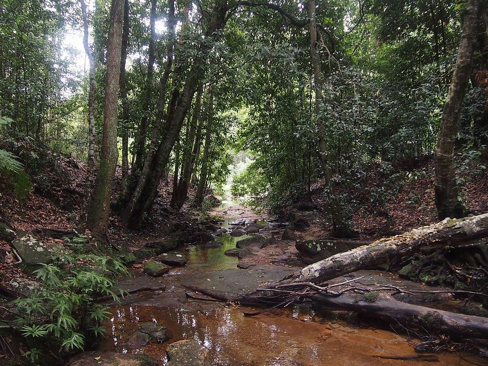Waterfall Creek - panoramio (2)