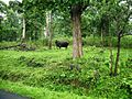 Wayanad Wildlife Sanctuary, Tholpetty Range - panoramio (5).jpg