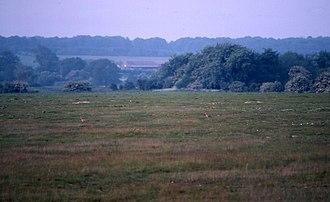Weeting Heath - Image: Weeting Heath geograph.org.uk 321673