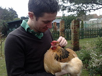 a tame hen being held being held in the U.K.