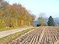 Westlich von Sevenig (Our) - geo.hlipp.de - 6819.jpg
