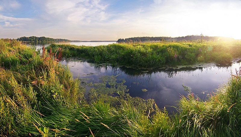 File:Wetlands (Moscow, Russia).jpg