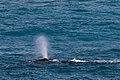 Whale (19804571349).jpg