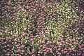 White and pink park flowers (Unsplash).jpg