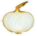 White onion cross section.jpg