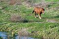 Whitstran Horse 5594.jpg