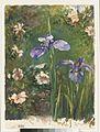 Wild Roses and Irises MET APS1443.jpg