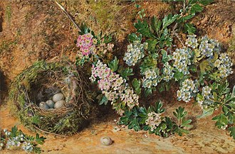 William Henry Hunt (painter) - Chaffinch Nest and May Blossom, c.1845
