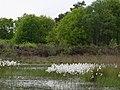 Witteveen - panoramio.jpg