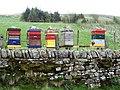 Wolfcleugh Farm - geograph.org.uk - 413138.jpg