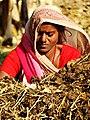 Woman at Work - Outside Lumbini - Nepal (13871029373).jpg