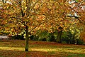 Wonderful autumn leaves in the Hexham Abbey Garden - panoramio.jpg