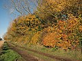 Woodland edge in autumn colours - geograph.org.uk - 1039421.jpg