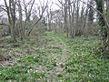 Woodland in March - geograph.org.uk - 468364.jpg