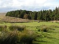 Woods at Batworthy - geograph.org.uk - 1473653.jpg