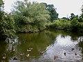 Wyre Pond - geograph.org.uk - 1399391.jpg