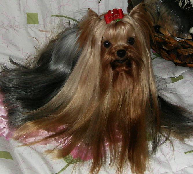 Image Result For Pounnd Dog How