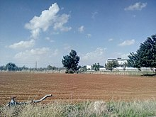 Cultivated agricultural field in Ypsonas Industrial Area, Limassol