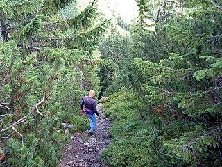 Les ako prostredie pre turistiku