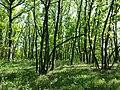"""Die Hohen Berge"" nördlich Ladendorf sl11.jpg"