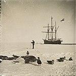 """""""Fram"""" ved iskanten i Hvalbukta (12114503603).jpg"""