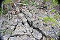 """Swiss cheese limestone"" (Pain Pond, San Salvador Island, Bahamas) 4 (15703242673).jpg"