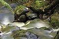 Águas do Canoas.jpg