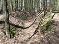 Łagiewniki Forrest in Spring 3.jpg