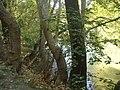 Κοιλάδα Τεμπών - Αγία Παρασκευή - Πηνειός Ποταμός 1.jpg