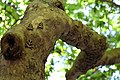 Πεταλούδες σε δέντρο.jpg