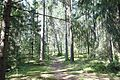 Боковая тропинка - panoramio.jpg