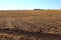 В южной части Кувандыкского района - panoramio.jpg