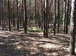 Гордонова гора.jpg