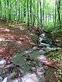 Гірський струмок у Кобилецькій Поляні.jpg