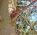 Дендропарк Олександрія, білка та синиця.jpg