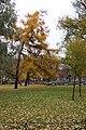 Деревья в Александровском саду.jpg