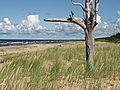 Деревянное зодчество - panoramio (2).jpg
