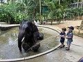 Довольный слон после душа.jpg