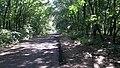Дорога через ліс - panoramio.jpg