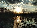 Кладка на Бондарівському болоті.jpg