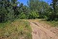 Лесная дорога в северном направлении - panoramio (1).jpg